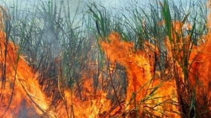 Incêndios em canaviais podem afetar próxima safra do Brasil, diz Unica