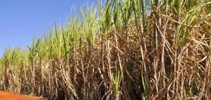 Embrapa Agroenergia coordena elaboração de agenda estratégica de inovação para as cadeias produtivas do açúcar e álcool