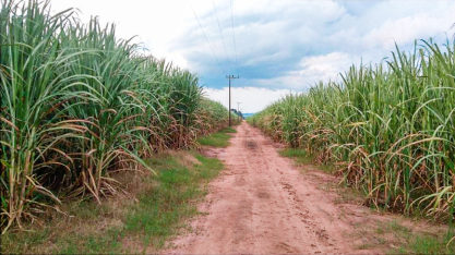A importância dos bioinsumos para os cultivos
