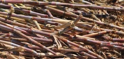 Potencial de produção de biomassa para energia em Goiás é debatida em reunião virtual