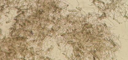 Coquetel enzimático desenvolvido no Brasil potencializa produção de etanol de segunda geração