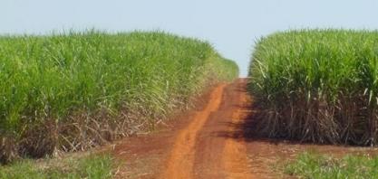 Corteva Agriscience apresenta inovações para cana-de-açúcar no 16º Insectshow