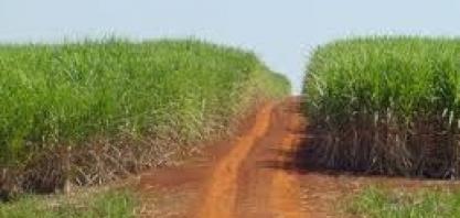Agricultura: Em municípios de Mato Grosso e Bahia, PIB do agro é mais da metade do PIB total