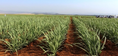 Secretaria de Agricultura e Abastecimento de SP faz diagnóstico inédito das pesquisas desenvolvidas em seus Institutos