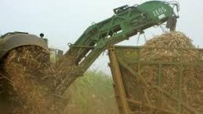 Rabobank projeta recorde de 38,2 milhões de toneladas de açúcar em 2020/21