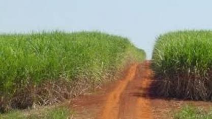 Corteva Agriscience leva soluções para o manejo de pragas na cultura da cana-de-açúcar no 13º Congresso Nacional da Bioenergia