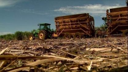 Safra da cana termina em SP com expansão na produção de açúcar