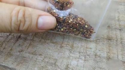 Ministério identifica pragas ausentes no Brasil em sementes não solicitadas