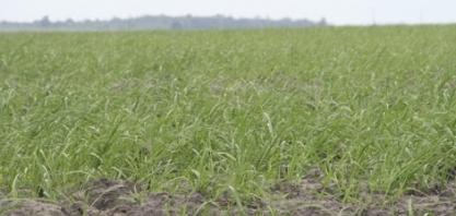 PARAÍBA – Pesquisa sobre evolução da cana-de-açúcar é realizada no estado