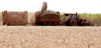 Produção de açúcar do centro-sul aumenta 57% na 1ª quinzena de novembro
