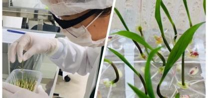 Cana será o tema da Embrapa Agroenergia na 17ª Semana Nacional de Ciência e Tecnologia