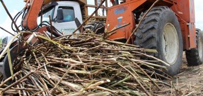 Sindaçúcar-AL espera safra com até 17,5 mi de toneladas de cana processadas