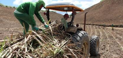 Pindorama firma parceria para moer excedente de cana da Coruripe
