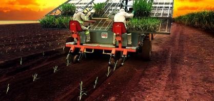 Transplantadora de Mudas de alta tecnologia já permite o plantio mecanizado de MPBs com qualidade e eficiência
