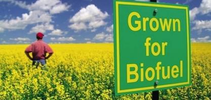 Leilões do biodiesel terão etapa exclusiva para produtores de pequeno porte