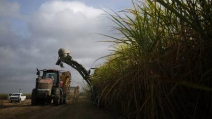 Usinas do Paraná estão quase fazendo açúcar só para atender as fixações externas já acertadas