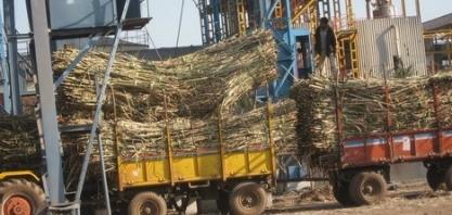 Exportações de açúcar da Índia podem ficar abaixo da meta
