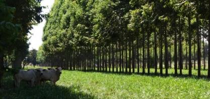 Os grandes temas da moderna agricultura