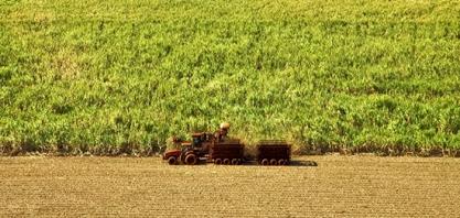 Moagem de cana cresce 4,39% na segunda quinzena de junho