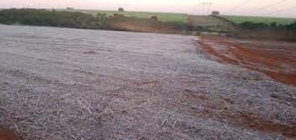 Análise da equipe agro do Itaú BBA sobre o impacto das geadas