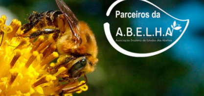 União pelas abelhas