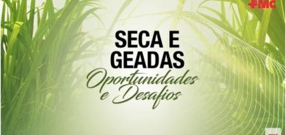 Especialistas dão dicas para produtores de cana que tiveram prejuízos com as geadas e a seca prolongada