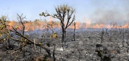 Governo de Minas Gerais lança plano de combate a incêndios criminosos