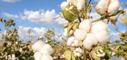 Fiagril investe em tecnologias para produzir biodiesel de milho e algodão