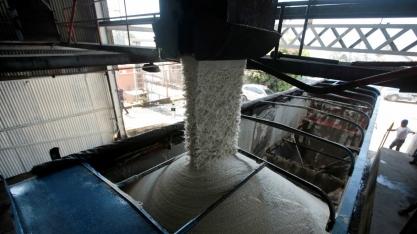 Maior produtor de açúcar da Índia eleva preço da cana em 7,9%