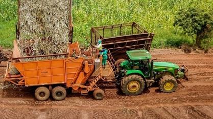 Do campo à indústria: rastreio de matéria-prima atende demandas do mercado por sustentabilidade e eficiência