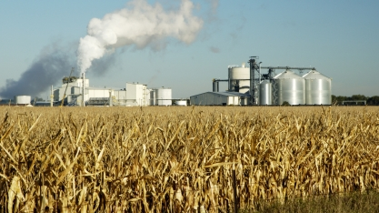 EUA pode diminuir milho no combustível e derrubar demanda