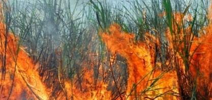 AFCP explica diferença de incêndio e queima controlada da cana na TV Globo