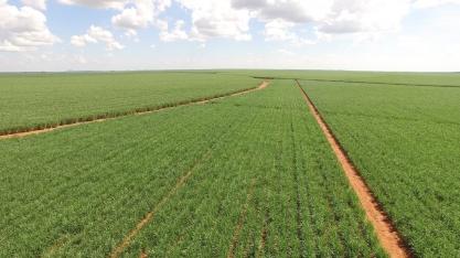Irrigação por gotejamento já é uma necessidade para garantir longevidade dos canaviais e mitigar problemas de estiagem
