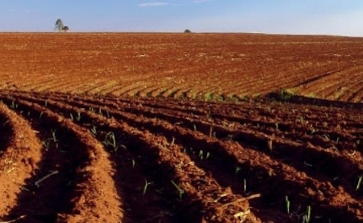 Canavicultor alagoano cria plantadora que consome de 3,5 a 4,5 ton/cana/ha