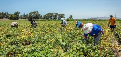 China aumenta o controle sobre exportações de fertilizantes